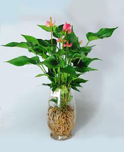 办公桌摆放植物